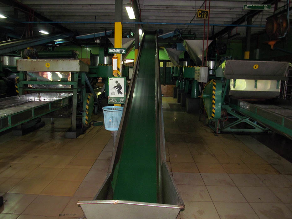 A conveyor belt in a Ceylon tea factory